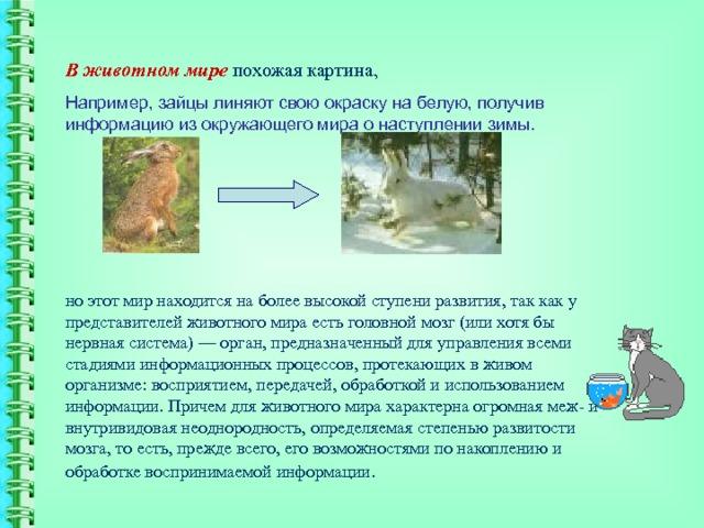 В животном мире похожая картина, Например, зайцы линяют свою окраску на белую, получив информацию из окружающего мира о наступлении зимы. но этот мир находится на более высокой ступени развития, так как у представителей животного мира есть головной мозг (или хотя бы нервная система) — орган, предназначенный для управления всеми стадиями информационных процессов, протекающих в живом организме: восприятием, передачей, обработкой и использованием информации. Причем для животного мира характерна огромная меж- и внутривидовая неоднородность, определяемая степенью развитости мозга, то есть, прежде всего, его возможностями по накоплению и обработке воспринимаемой информации .