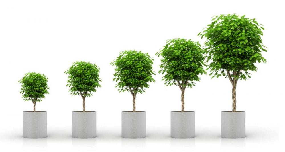 Картинка как растет дерево многие